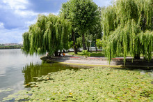 Beautiful View: Lake In The Park, Blue Sky And An Island With Willows Around