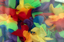 Rainbow Flag Flowers Close Up Detail