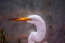 Great White Egret, Oil Painting