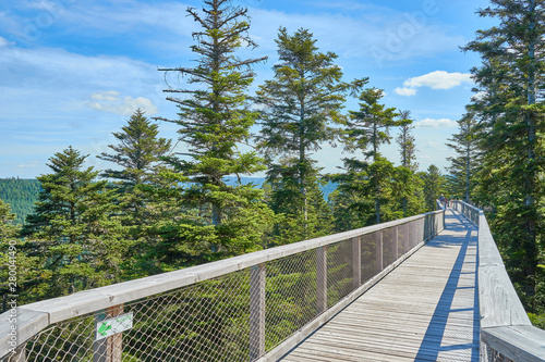 Fotografie, Obraz  Treetop Walk in the Black Forest