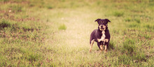 Portrait Of A Smiling Black Dog That Looks Into The Camera, Mongrels Close-up. Mixed Breed Dog Enjoying Nature.