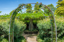 Arched Climbing Plant Flower W...