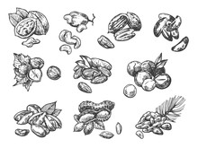 Nuts Set Sketch Style Food Ill...
