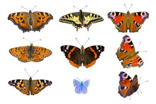 Nine Isolated Butterflies Closeup On White Background