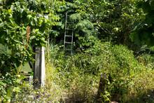 Overgrown Garden Background