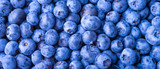 Many blueberry berries on a flat surface, top view, close-up. Background of berries, blueberries macro