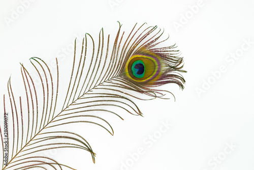 Foto op Aluminium Pauw Peacock feather color full isolated nature white background bird