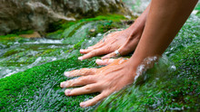 Tanned Female Hands Stroke Green Moss Growing In The Clear And Transparent Water Of A Mountain River.