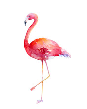 Watercolor Pink Flamingo On Wh...