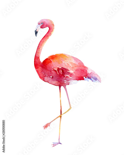Watercolor pink flamingo on white background Canvas Print