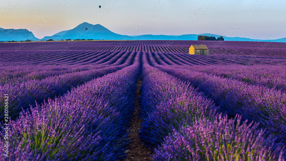 Fototapety, obrazy: View of the lavender fields