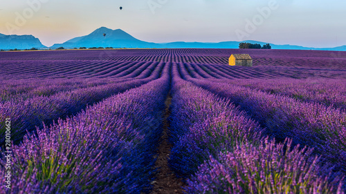 Fotobehang Lavendel View of the lavender fields