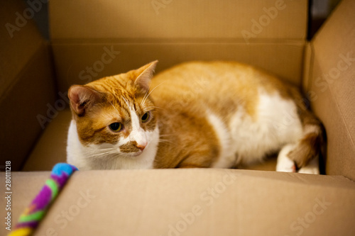 cat laying in box