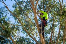 A Professional Arborist, Or Tr...