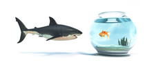 Fish Bowl Shark