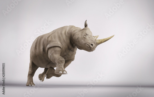 Photo Rhino in studio