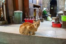 Crossed Eyed Cat In Cairo