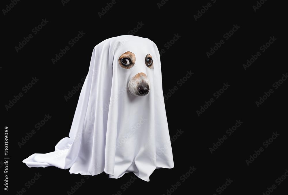 Fototapeta Ghost on black background. Halloween carnaval party