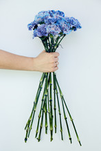 A Bouquet Of Blue Carnations Flowers On A Blue Wall In A Hand