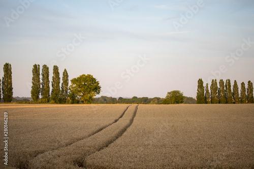 Leinwand Poster champ de blé