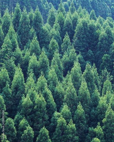 Montage in der Fensternische Olivgrun pine forest