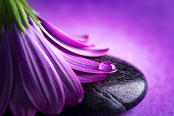 fiore rosa con goccia di ru...
