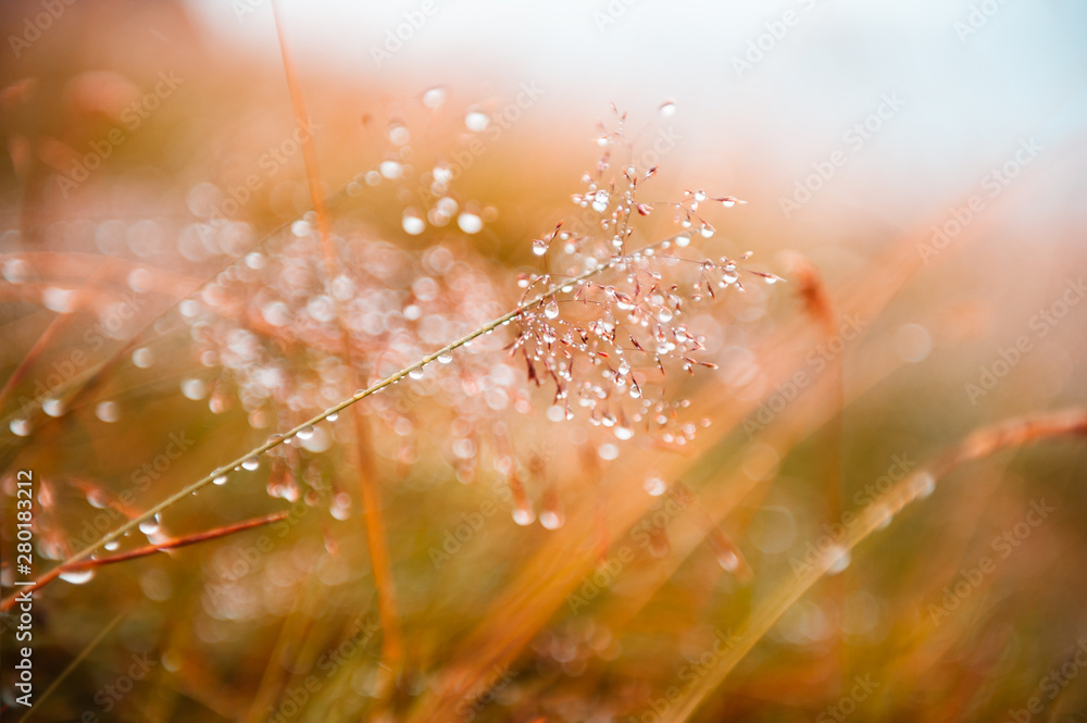 Fototapety, obrazy: Autumn grass with water drops during the rain. Macro image, shallow depth of field. Beautiful