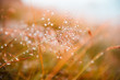 Autumn grass with water drops during the rain. Macro image, shallow depth of field. Beautiful