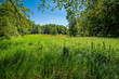 Feuchtwiese am 66 Seen Wanderweg im FFH-Naturschutzgebiet