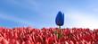 canvas print picture - 3D Illustration einzigartige blaue Tulpe