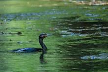 夏の養老渓谷で野鳥を見る