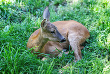 View Of A Fawn Lying In The Forest