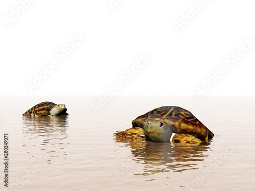 Foto op Canvas Schildpad brown turtle in the ocean - 3d rendering