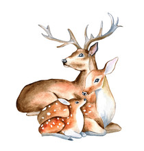 Spotted Deer, Family. Female, Male, Fawn Isolated On White Background. Watercolor. Illustrated. Template. Handmade