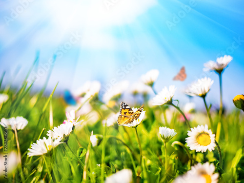 Papiers peints Marguerites Chamomile daisies in green field on blue sky background with sunshine and flying butterfly. Summer natural landscape with copy space