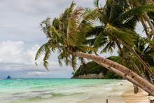 A Palm Tree On A Tropical Beac...