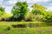 Southern Blooming Marsh Land I...