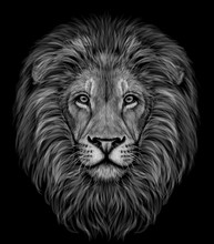 Lion. Black And White, Graphic Portrait Of A Lion's Head Profile On A Black Background.