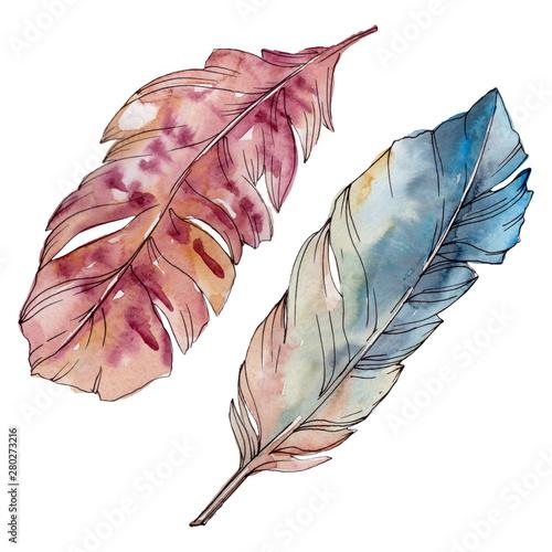 kolorowy-ptasi-piorko-od-skrzydla-odizolowywajacego