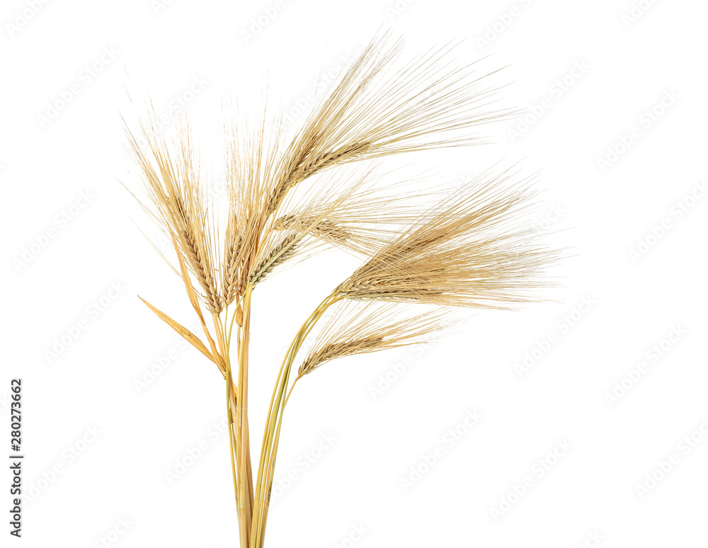 Fototapety, obrazy: Ears of barley isolated on a white background