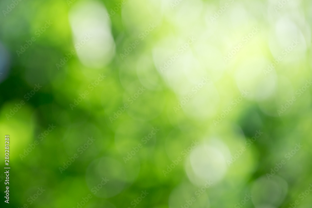 Fototapeta Green bokeh background from nature forest out of focus