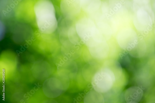 Deurstickers Planten Green bokeh background from nature forest out of focus