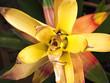 canvas print picture -  Gelb Orangene Blume weiter weg