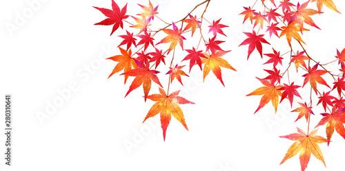 紅葉 もみじ 葉 背景 Canvas