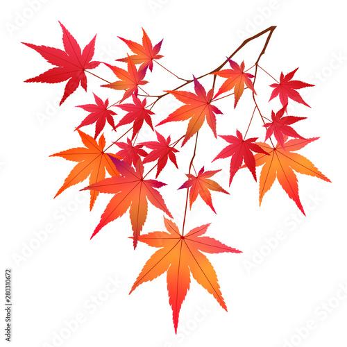 紅葉 もみじ 葉 アイコン