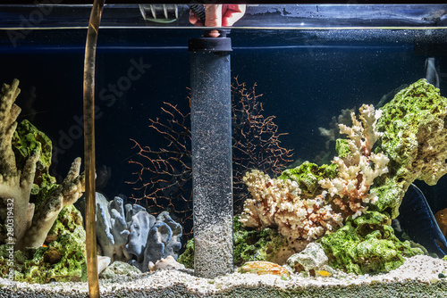 Cleaning of gravel in a freshwater aquarium Canvas Print