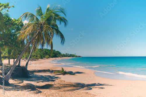 Cadres-photo bureau Bleu Coconut trees, golden sand, turquoise water and blue sky, wonderful pearl beach , Guadeloupe, French West Indies, panoramic view