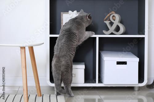 Obraz Curious cute cat at home - fototapety do salonu
