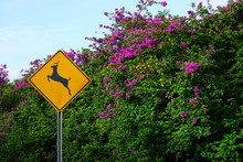 Yellow Deer Crossing Sign By A...
