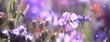 Leinwandbild Motiv Blumenwiese im Sommer - Blumen Wiese Hintergrund Panorama